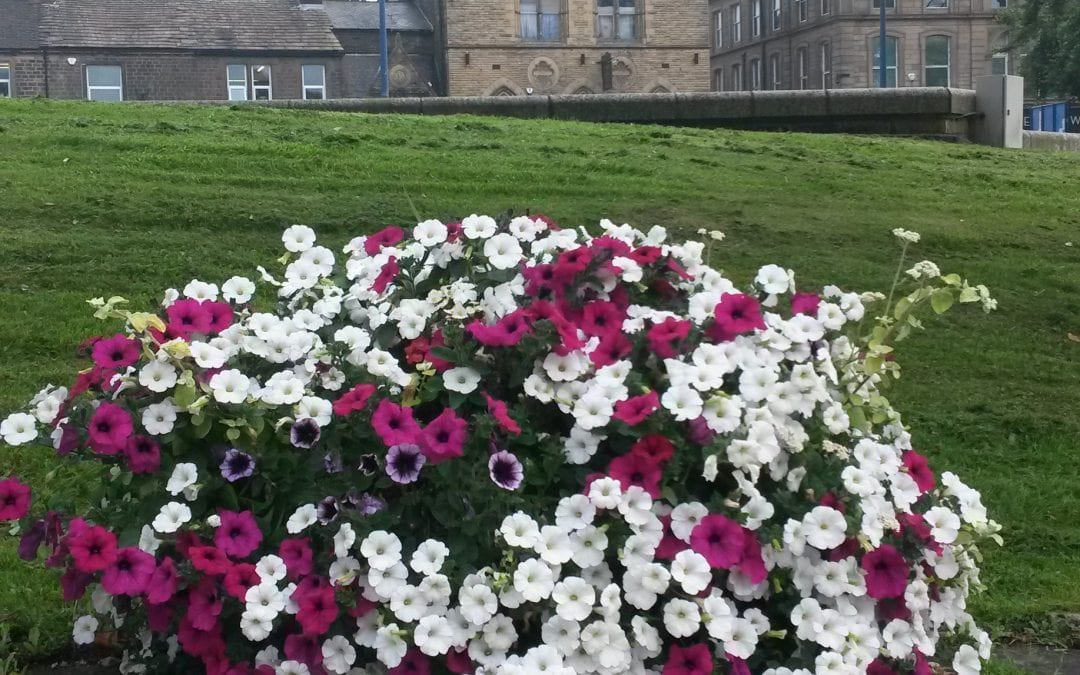 Invitation to Tender for Floral Display Contract